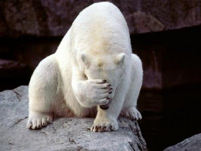 polar-bear-face-palm_thumbnail_345.jpg